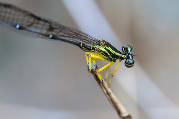 damselfly in forest