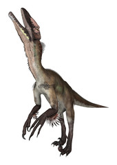 Dinosaur Utahraptor