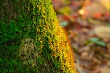 Moos auf Baumstamm mit romantischem Licht