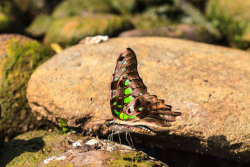 Beautiful Butterfly on ground