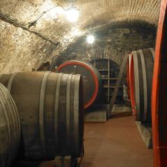 wine cellar, Czech Republic