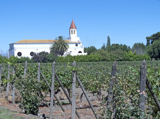Wine industry in Maipo valley, Chile