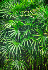Tropical Asian rain forest leaves background