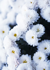 Close up of flower, shallow DOF