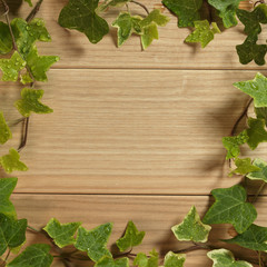 An Ivy plant on a table of hardwood
