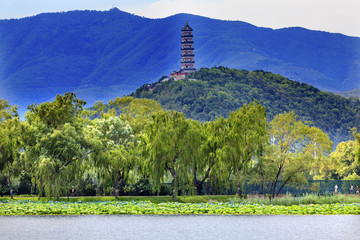 Yue Feng Pagoda Lotus Garden Willow Trees Summer Palace Beijing