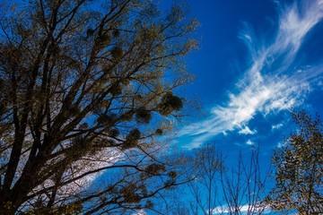 Wolkenzauber über Mistelzweigen