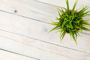 Potted grass flower over wooden table