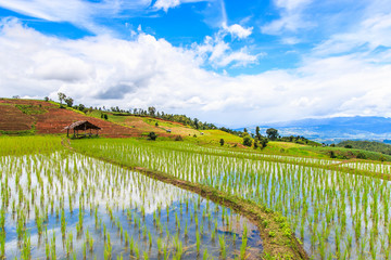 Step rice field at Pa Pong Peang in Chiangmai province, Thailand