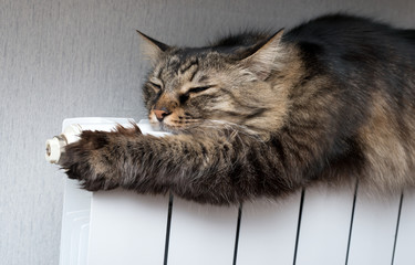 Tabby cat lying a warm radiator