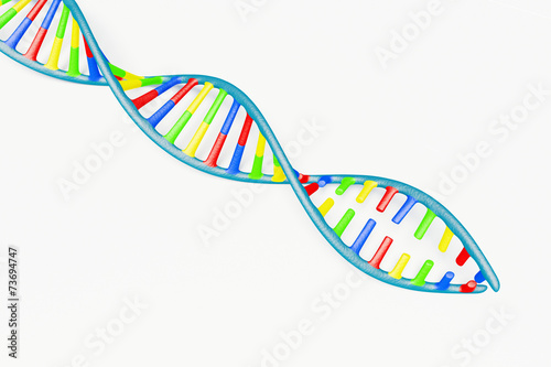 canvas print picture DNA replication