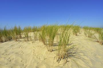Dunes écheveulées
