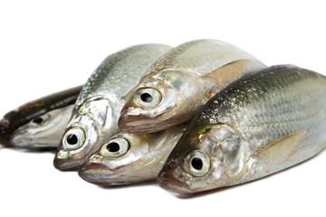 Fresh raw sardines on white background