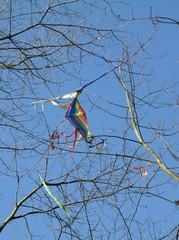 Drachen verheddert zwischen Ästen und Zweigen