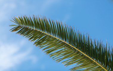 Fading Palm