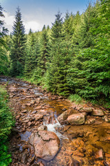 Beautiful mountain stream on a sunny summer day