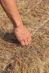 Hand holding haystack