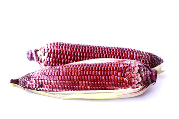 Purple Corn - Stock Image