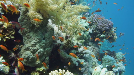 Colorful underwater reef with coral and sponges