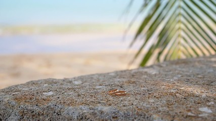 Closeup of Wedding Rings on Beach at the Sea.