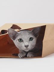 ベージュの手さげ袋に入ったロシアンブルーの子猫