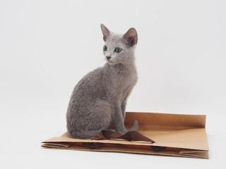 茶色の手さげ袋にのったロシアンブルーの子猫
