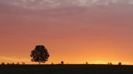Lone tree at sunrise