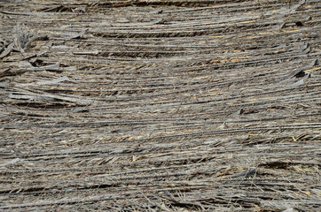 Texture of the classic thatch roof