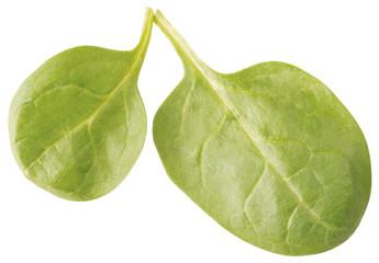 arugula salad leaves isolated