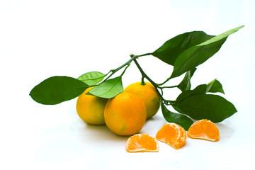 мандарины на веточке на белом фоне