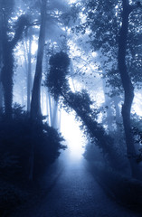 Road in foggy forest