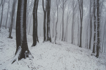 forest with snow covered ground in winter