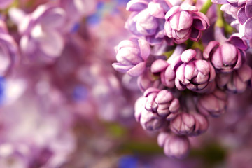 floral background with lovely lilac flowers