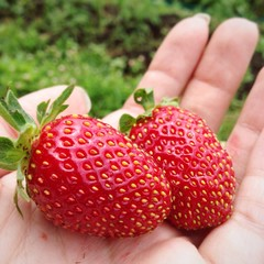 fresh strawberry on the hand