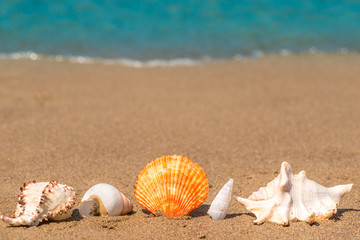 beautiful seashells on the sand lined up macro shot