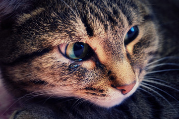 An emotional portrait of a crying cat.