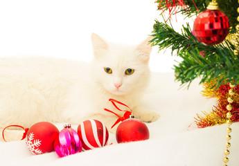 cat, christmas, christmas tree, santa claus hat