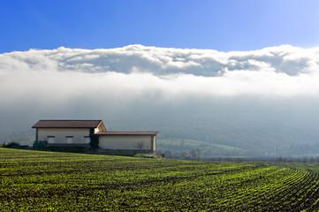 farm with fog in Salvatierra