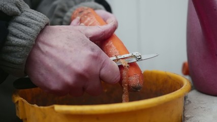Female hands peeling carrot into bucket