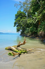Driftwood on the beach with tropical vegetation