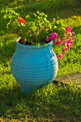 Flowerpot at small mediterranean garden