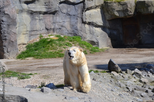 Tuinposter Ijsbeer Eisbär