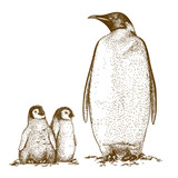 Engraving antique illustration of three king penguins