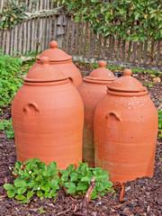 Rhubarb growing pots