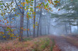 path in foggy autumn forest