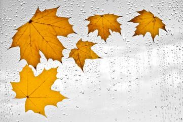 Kolorowe jesienne liście i krople deszczu na oknie