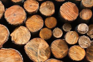 Stos drewnianych kłód świeżo ściętych  drzew w leśnym składzie