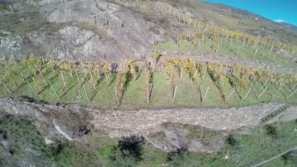 Sondrio - Lombardia - Vigne D.O.C. del Sassella
