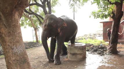 Men wash the elephants in India