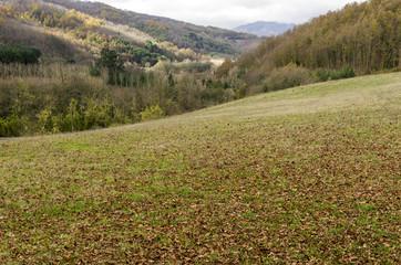 glade of mountain in autumn